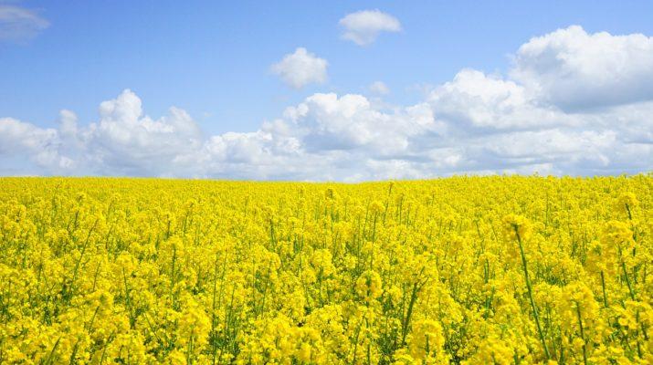 Herbicydy i inne środki ochrony roślin