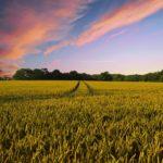 Profesjonalne środki grzybobójcze do zastosowań w ogrodzie i na polu uprawnym